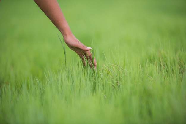 Die hand der frau, die das grüne gras berührt