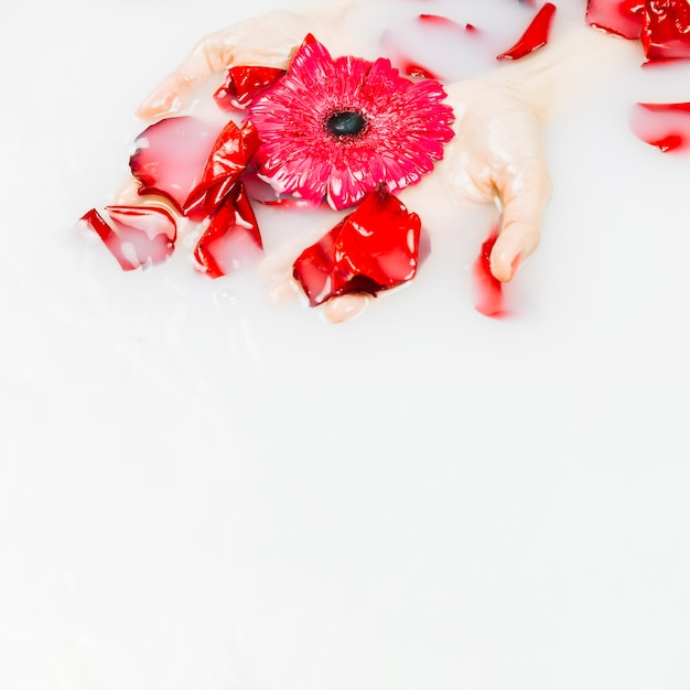 Die hand der frau, die rote blume und blumenblätter auf flüssigem hintergrund hält