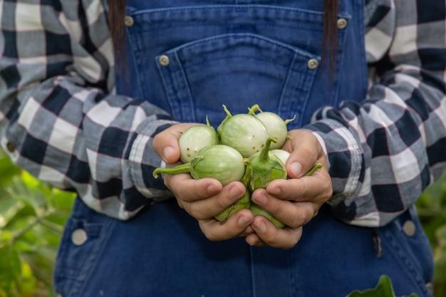 Die hand des bauern, die frau, die das gemüse in der hand hält und die eines reisfeldes.