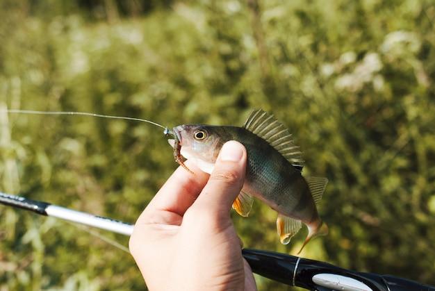 Die hand des fischers, die fische hält