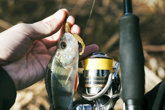 Die hand des fischers mit frischem gefangenem fisch