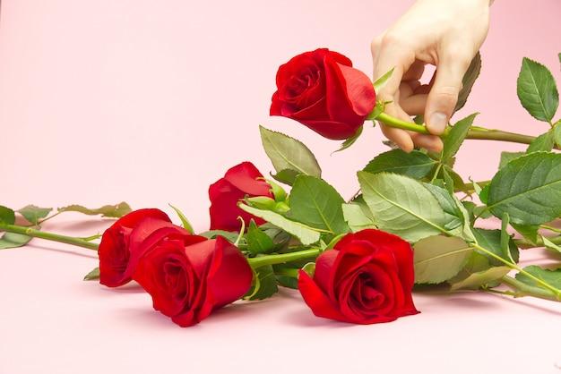 Die hand des jungen mannes hebt eine rote rose auf einem rosa hintergrund an. das konzept der wahl der perfekten rose für ihre geliebte zum valentinstag, muttertag, 8. märz.