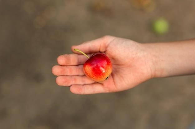Die hand des kindes hält einen kleinen apfel in der handfläche.