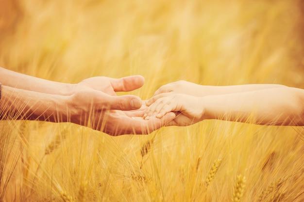 Die hand des kindes und des vaters auf weizenfeld. selektiver fokus