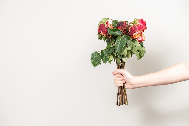 Die hand des mannes streckt einen strauß verwelkter blumen aus. trockene rote rosen und eine kopie des raumes