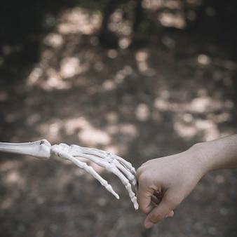 Die hand des skeletts, die menschliche faust anschließt