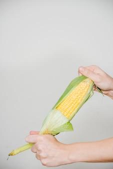 Die hand einer person, die maiskolben auf weißem hintergrund hält