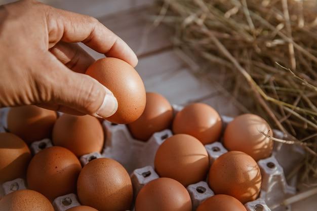 Die hand hält das ei in der vom hof gesammelten hand.