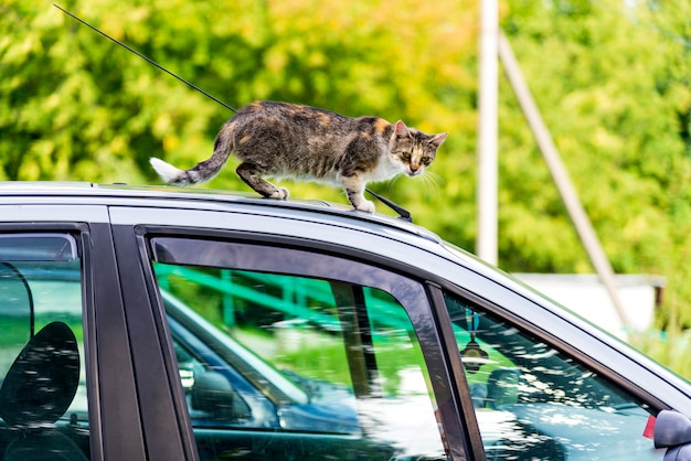 Die heimatlose katze kletterte auf das dach eines autos
