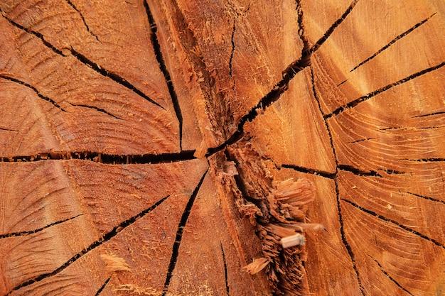 Die hintergrundstruktur des geschnittenen baumes
