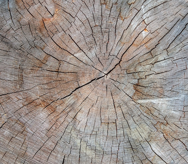 Die holzstruktur des geschnittenen baumstammes, nahaufnahme