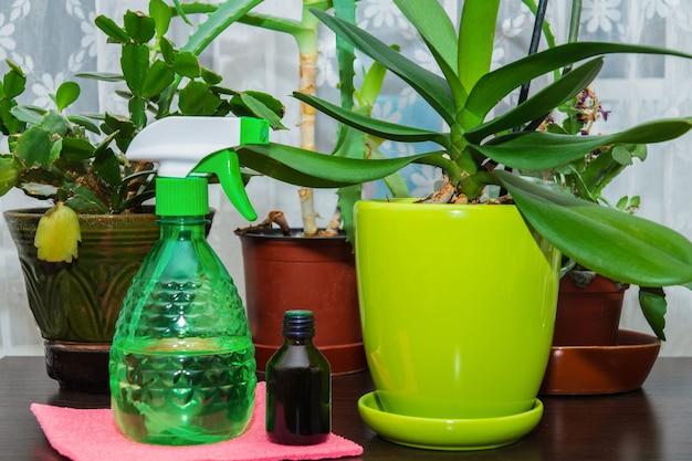 Die idee, zimmerpflanzen zu pflegen