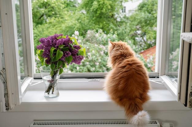 Die ingwerkatze genießt den moment und schaut nach draußen zum offenen fenster