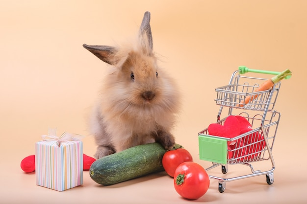 Die kaninchen auf der orange haben viel gemüse als futter- und geschenkboxen.