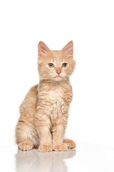 Die katze auf weißer wand