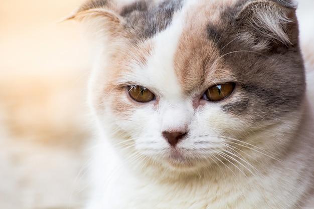 Die katze, die auf boden, brauner katze und weißer katze sich entspannt