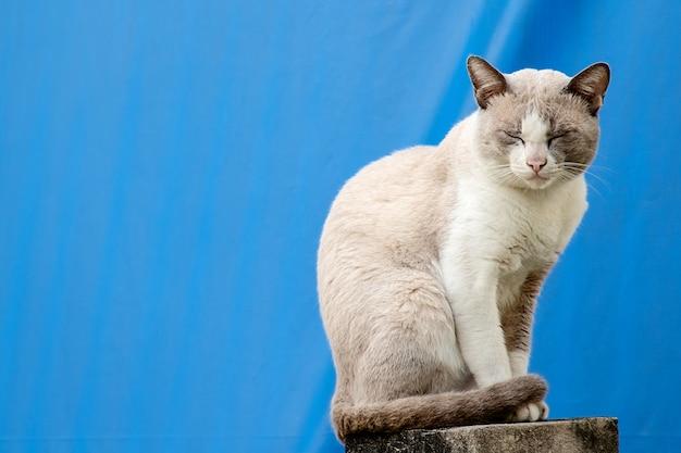 Die katze, die auf dem zaun des hauses gegen blauen segeltuchhintergrund sitzt