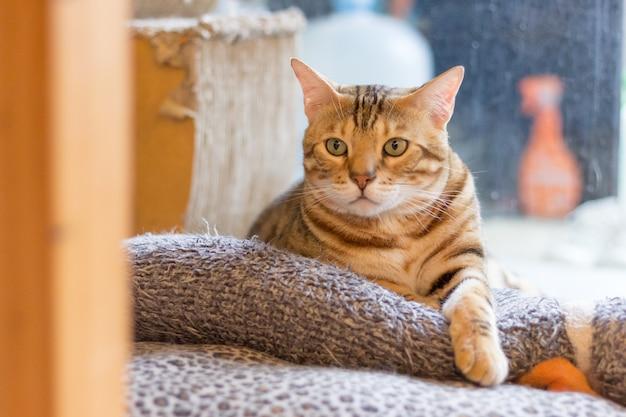 Die katze, die zu dir schaut