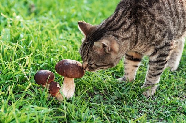 Die katze geht auf dem grünen gras spazieren und schnüffelt essbare pilze