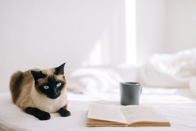Die katze liegt auf dem bett und schaut aus dem fenster neben einem offenen buch und steht eine tasse kaffee oder tee.
