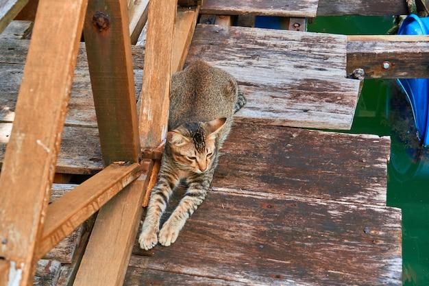 Die katze liegt auf dem holzsteg des fischerdorfes und wartet auf futter