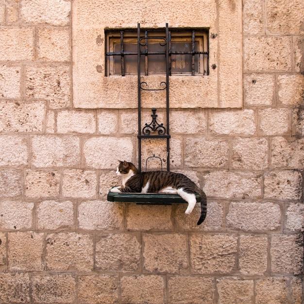 Die katze liegt auf der straße auf einem speziellen ständer, der an der wand hängt.