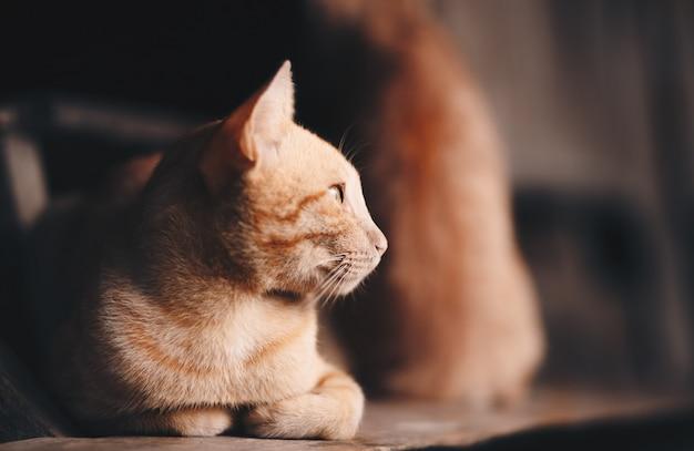 Die katze liegt auf der treppe