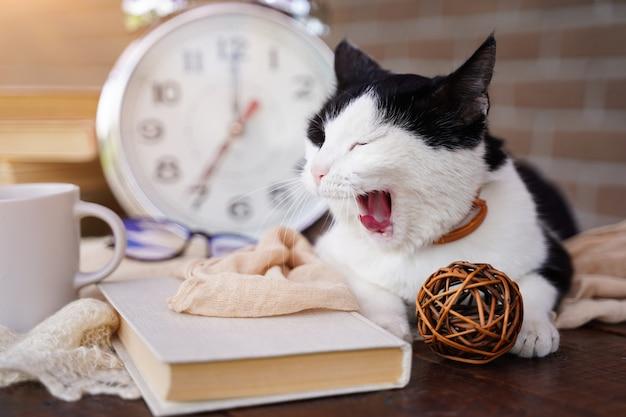 Die katze liegt früh morgens in der nähe des weckers und gähnt zurück zum schulaufwachen