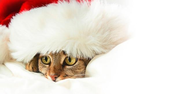 Die katze liegt in einer roten weihnachtsmannmütze auf einem hellen hintergrund. banner. speicherplatz kopieren.