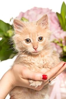 Die katze mit den blumen
