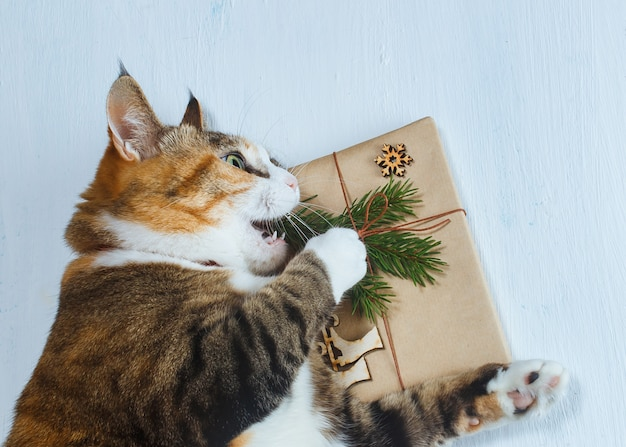 Die katze möchte ein weihnachtsgeschenk öffnen