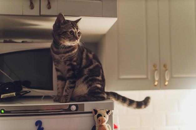 Die katze rennt nachts durch die küche und weckt die besitzer mit lärm.