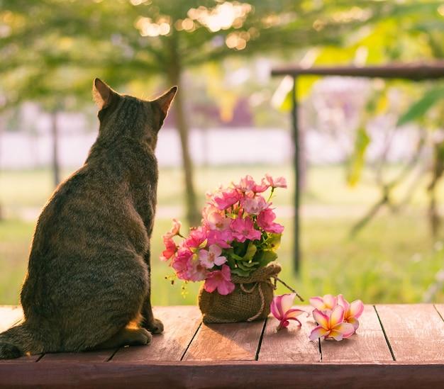 Die katze saß auf dem tisch und schaute sonnenuntergang