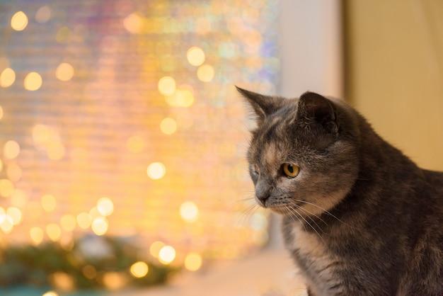 Die katze schaut zur seite gegen die szene der weihnachtsgirlanden.