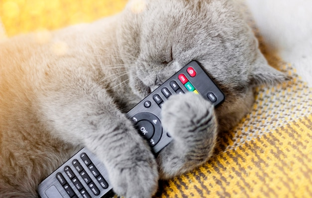 Die katze schläft mit einer fernbedienung. katze und fernbedienung. schlafende katze.