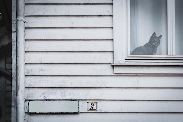 Die katze sitzt auf dem fenster und schaut hinaus. dunkler und blauer ton, horror und halloween co