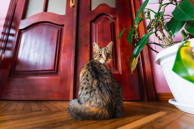Die katze sitzt in einem raum neben der tür und schaut in die kamera.