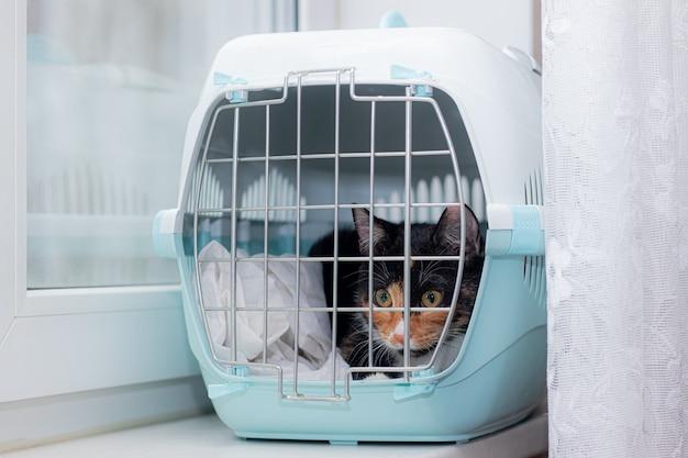 Die katze sitzt in einem transportbehälter für tiere ein haustier transport von tieren