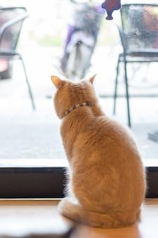 Die katze wartet auf den besitzer