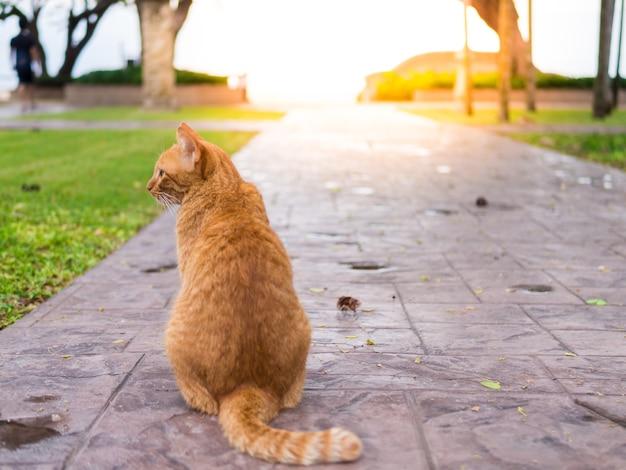 Die katze wartet auf den eigentümer, um im korridor mit dem meer als hintergrund zu bleiben.
