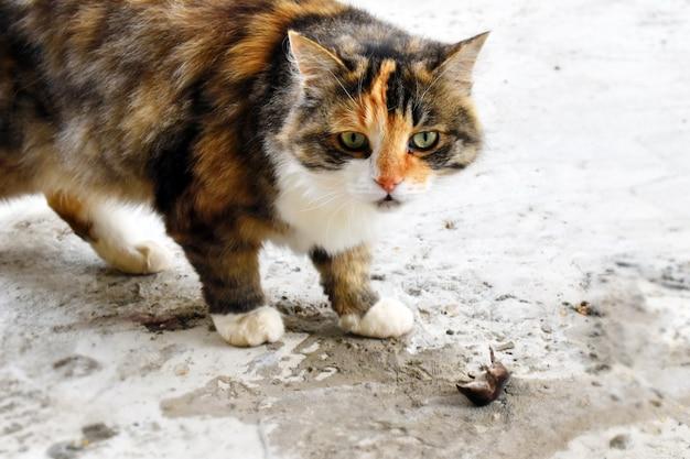 Die katze wird von einem maulwurf im garten gefangen.