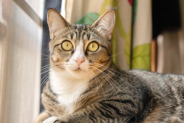 Die katzen sehen auf diese weise sehr süß aus.