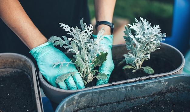 Die kaukasische frau, die handschuhe trägt, vergießt und pflanzt einige pflanzen zu hause im hinterhof des hauses neu