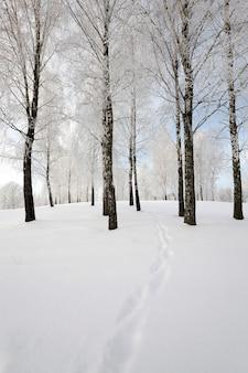 Die kleine straße in einer wintersaison fotografiert