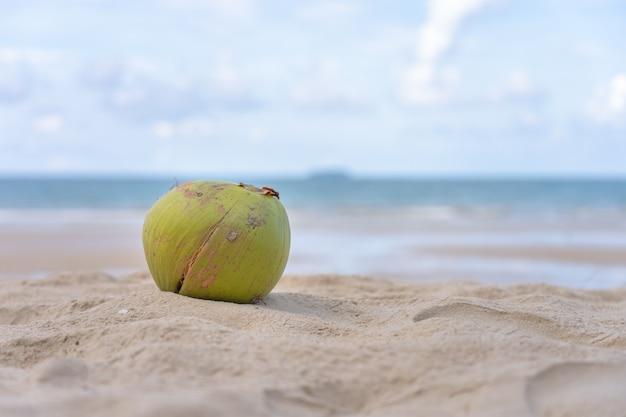 Die kokosnuss liegt auf einem sandhaufen am strand mit blick auf meer und himmel.