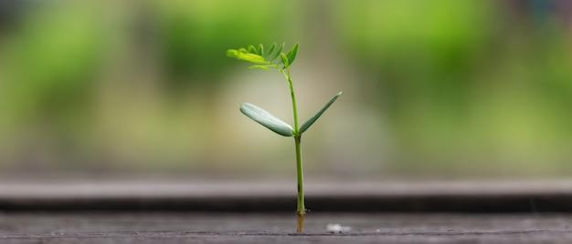 Die landwirtschaft, die das wachsende säen pflanzt, geschäft ragt herauf konzept. 21: 9 seitenverhältnis