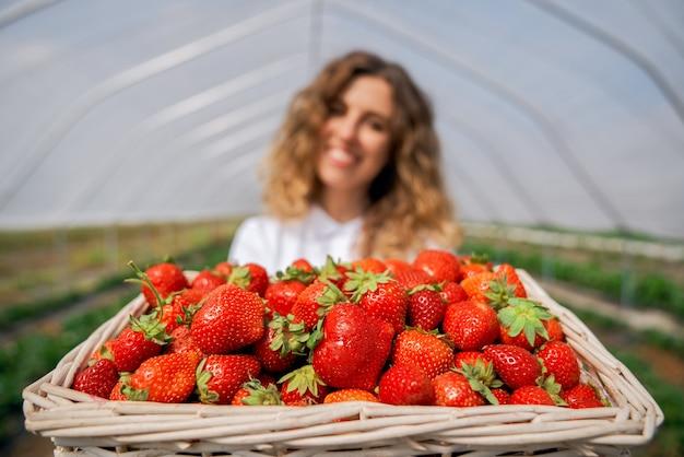 Die lockige brünette hält erdbeeren im gewächshaus