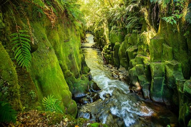Die majestätische landschaft in der schlucht im whirinaki-wald mit dem fluss, der durch die gemeißelten wände der schlucht rast, die mit verlust und flechten bedeckt sind