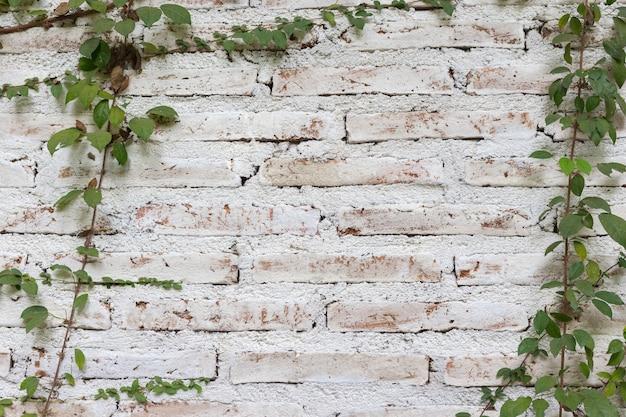 Die mauer ist aus ziegelsteinen und dann weiß gestrichen. es gibt schlingpflanzen an der linken wand.