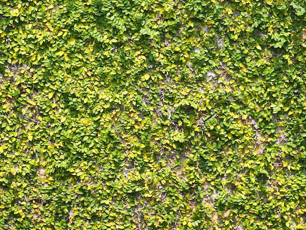 Die mauer war mit schlingpflanzen bedeckt